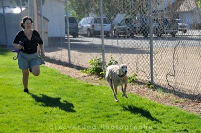 Claudia runs after a hound
