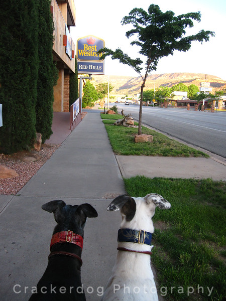 Sadie and Katie check out a stranger down the street.