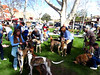 2009 West Coast Greyhound Gathering, Solvang, CA : 5 galleries with 1557 photos
