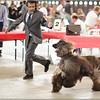 La preuve -> les chiens de luxe !