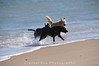 Other dogs frolic at the beach