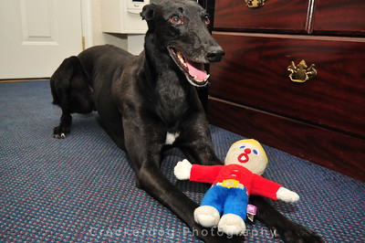 Zuni and Mr. Bill