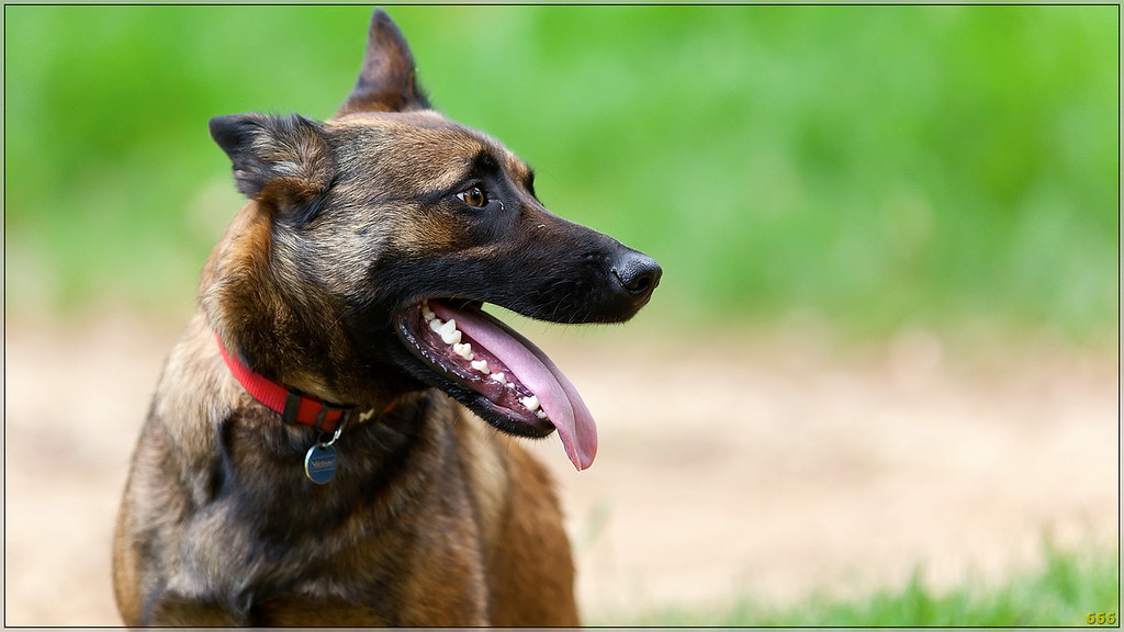 IMAGE: http://photos.corbi.eu/Pets/2011-04-23-Randonnées-des/i-HRPrrfb/0/XL/_mg_8682%20copie-XL.jpg