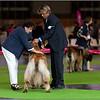 Présentation type Westie !! pattes arrières bien écartées ??????? pour un chien de paysan, c'est space !