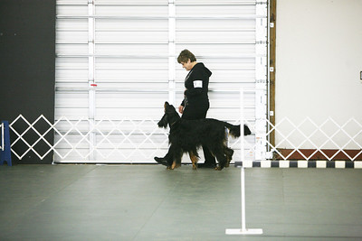 2011 NCGSC obedience