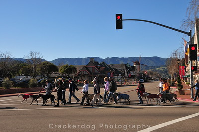 The parade of people and hounds heads towards Mission Santa Ines