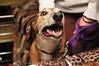 A happy greyhound visitor