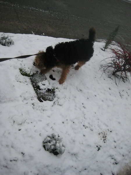 2012-01 Puppy in Snow