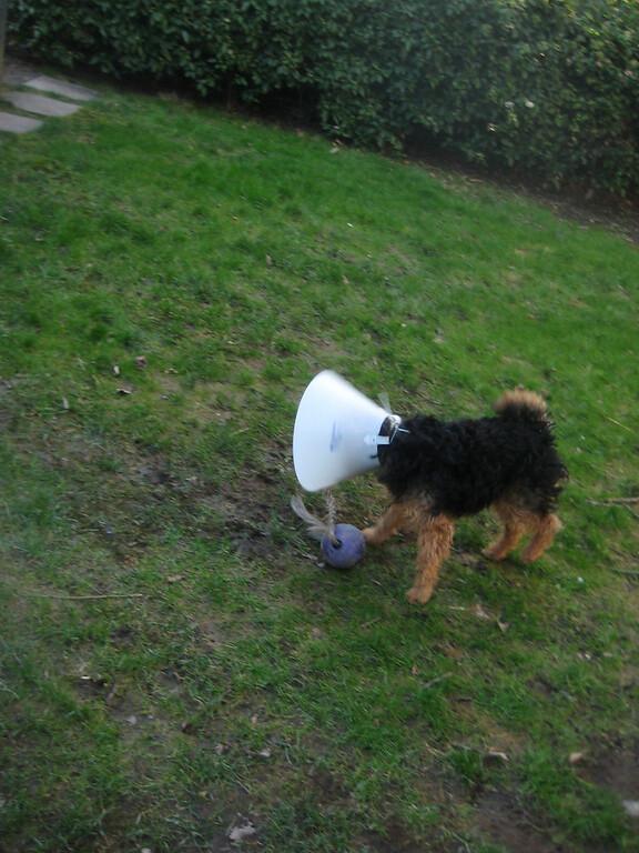 2012-02 Puppy Cone