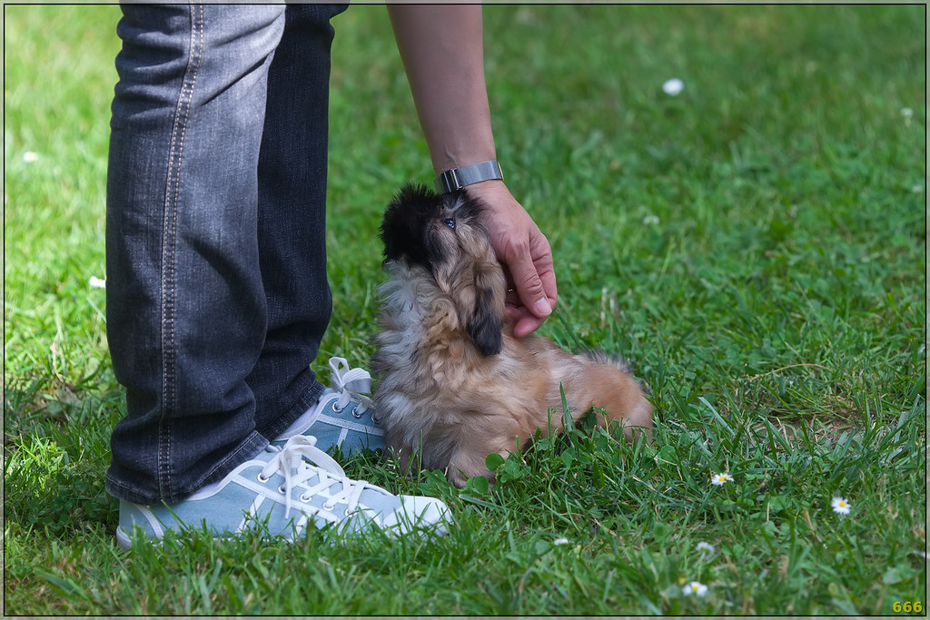 IMAGE: http://photos.corbi.eu/Pets/2012-06-02-Helios-Arrive/i-LdjRWb3/0/XL/MG2958-copie-XL.jpg