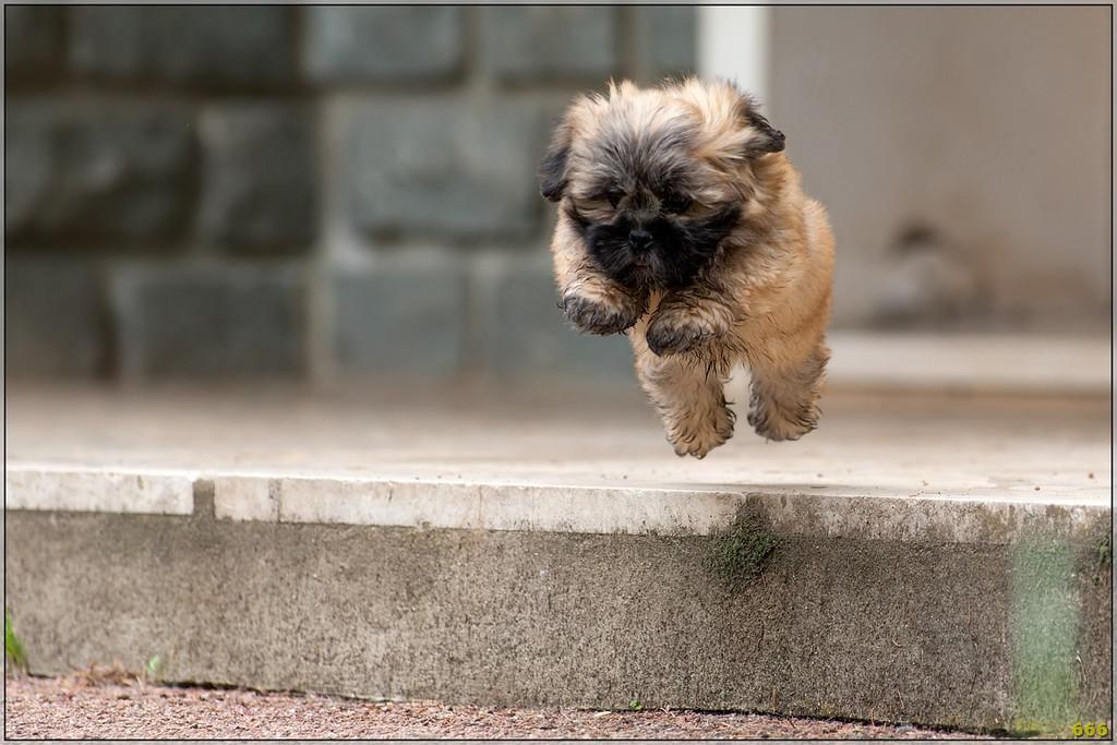 IMAGE: http://photos.corbi.eu/Pets/2012-06-10-Helio-dit-Hulk-Joue/i-hbm6dB3/0/XL/B0P3350-copie-XL.jpg