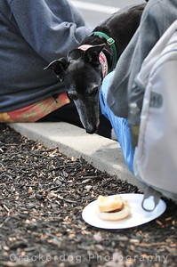 A greyhound spies on some noms