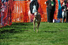 2012 West Coast Greyhound Gathering, Solvang, CA : 6 galleries with 2205 photos