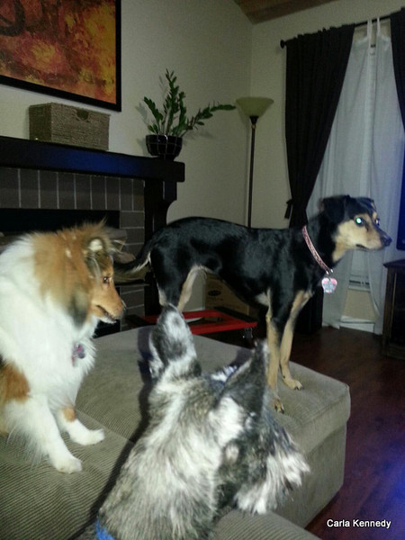 This picture was supplied by the doggie sitter Christine