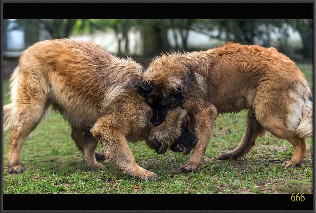 IMAGE: http://photos.corbi.eu/Pets/2013-12-29-Vacances-dAthéna/i-D3kTkrt/0/XL/_R8T3676%20copie-XL.jpg