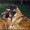 Iwa et Hermes sont définitivement des amoureux inséparables.