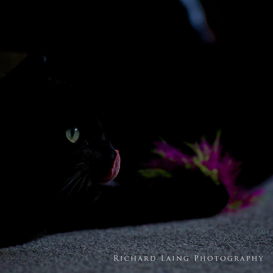 Cat_2014-01-13_18-10-28__DSC7471_©RichardLaing(2014)