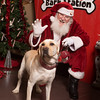 20141207-Mostly Mutts - Bark Station-352