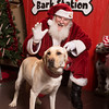 20141207-Mostly Mutts - Bark Station-350