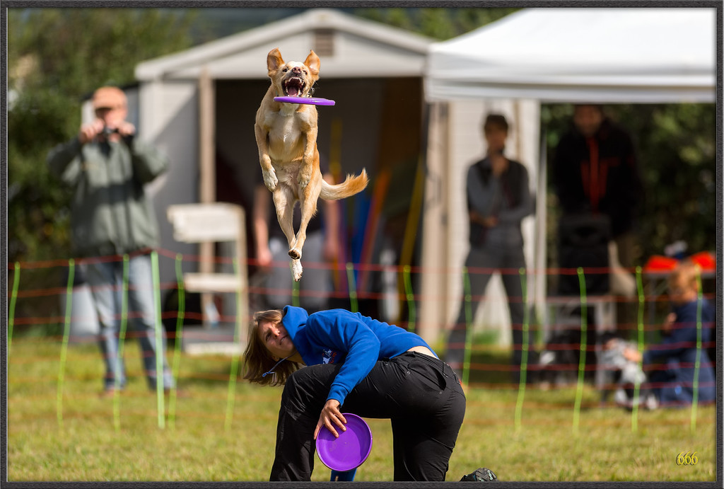IMAGE: http://photos.corbi.eu/Pets/2015-09-15-Fete-du-dressage/i-cjBRPJG/0/XL/_R8T4346%20copie-XL.jpg