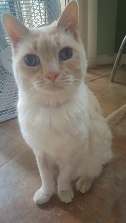 2016-08-Pets