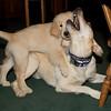 3306 Dexter and Rem 13 weeks