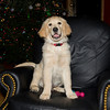 Am I allowed on this Chair?<br /> Dexter at 14 weeks old