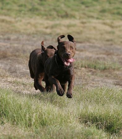Dogs In The Field!