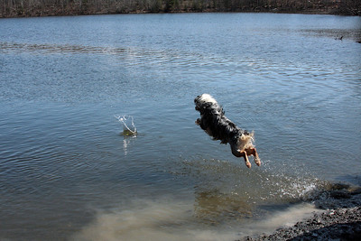 "For Sky, it's not about the ""swimming"", it's all about the BIG JUMPS!"