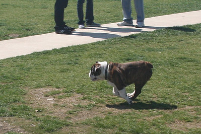 Who says Bulldogs aren't athletic?
