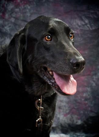 A Service Dog Named Journey