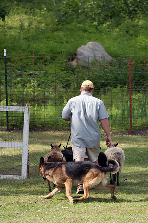ASCA Herding