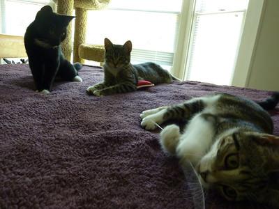 Abby, Libby and Hollyanne