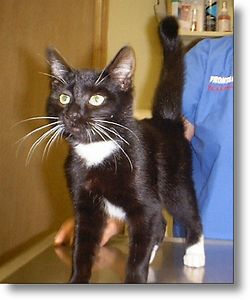 """""""Johnny Cat"""" got adopted, 9-22-03"""