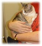 Autumn got adopted,  9-27-03<br /> She is a stunning tabby/calico mix.  Autumn has a gentle loving nature.