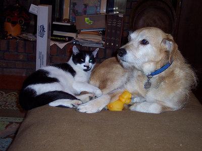 Alfie and Satchi