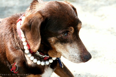 Sweet Belle in her pearls.