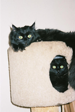Two black babies
