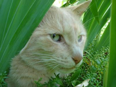 07-07-2008 Kitty in the Iris