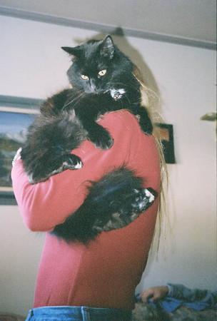 Rosie Kitty