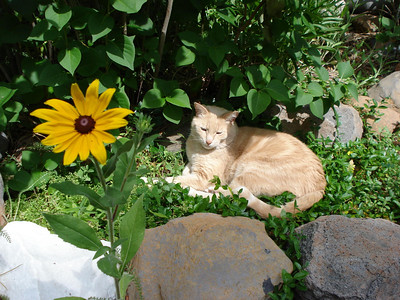 Kitty and the Coneflower