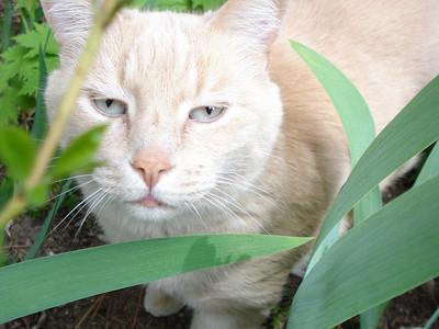Kitty 06-07-2010