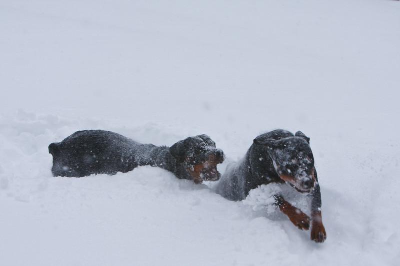 Snow2009_122009_024