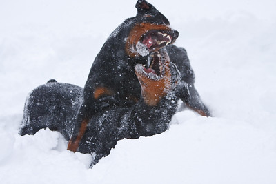 Snow2009_122009_129