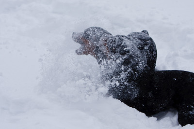 Snow2009_122009_042