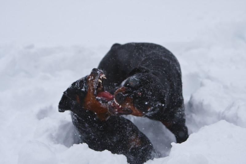 Snow2009_122009_095