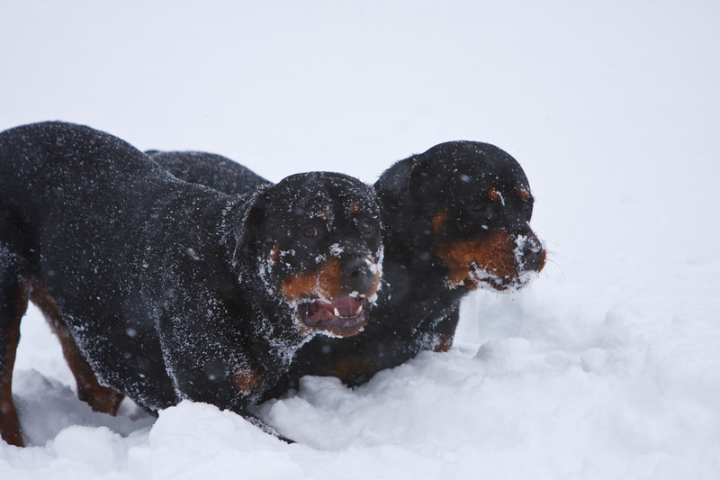 Snow2009_122009_151