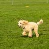 Playing in a dog park<br /> Farmington, UT<br /> August 2018