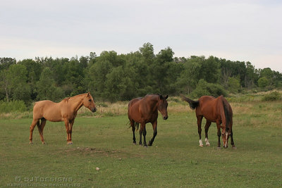 uncle daves horses