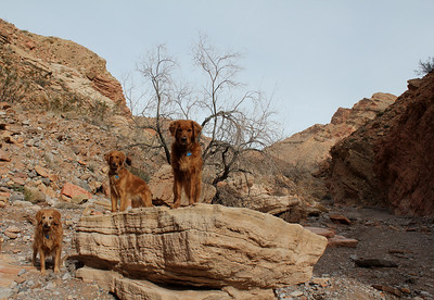 Lizzie, Sherman and Sparky Wash area Anniversary Narrows at Lake Mead Las Vegas, Nevada
